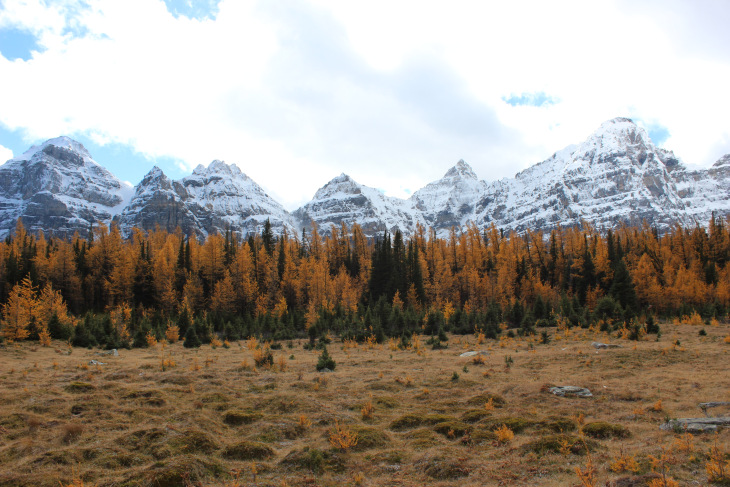 Larch Valley.jpg